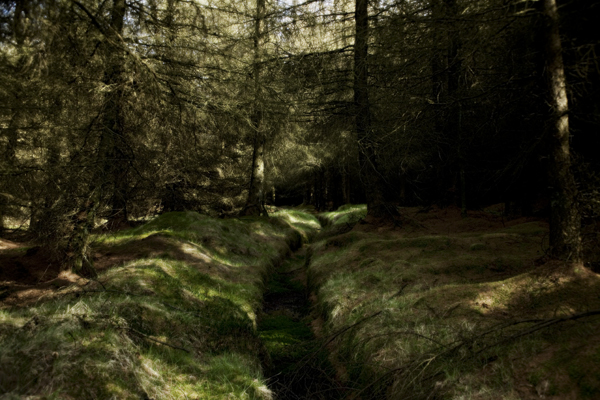 Woods, wooded area, sunlight, rombalds moor