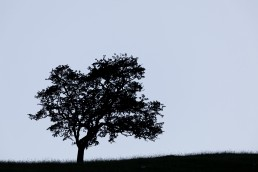 Tree Silhouette, Malham Cove