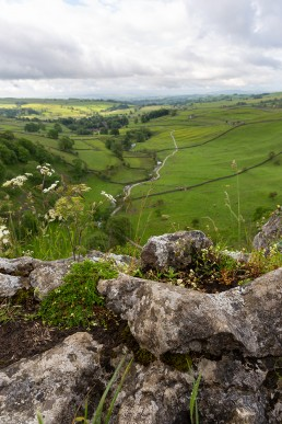 Wildflowers and view from Malham Cove
