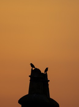 Starling on chimney at sunset