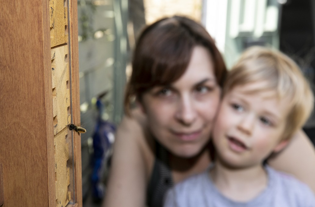 Mother and son watch a mason bee approach solitary bee nest box