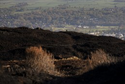 Red grouse above the town of Ilkley from lkley Moor after fire