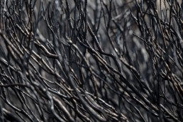 Detail of burned heather