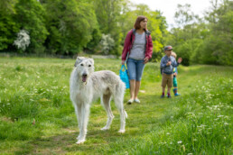 light, grey Lurcher dog with family in the Yorkshire Dales, dog walking