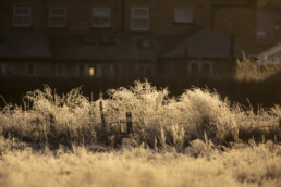 Golden light fall on a frost covered grassy area